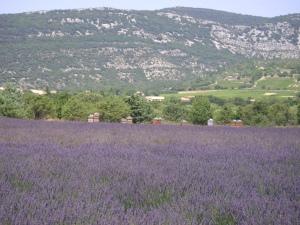 lavender field madebyjayne.com